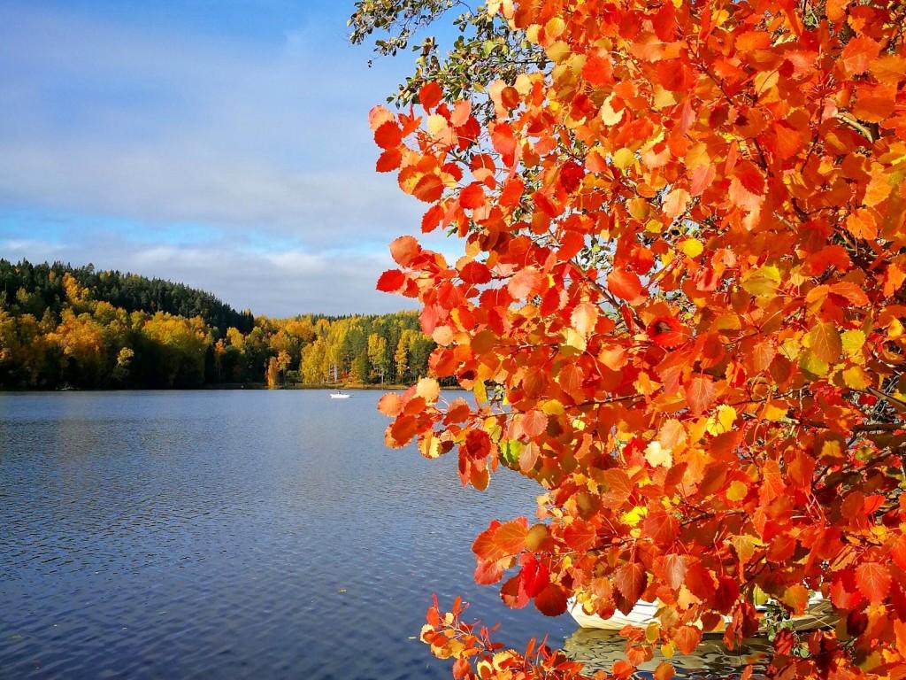 nuuksio_autumn3